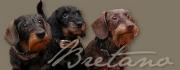Bretano-Shop: schönes und nützliches für Dackel & Co.!